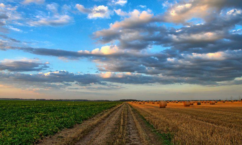 Niedersächsisches Landwirtschaftsministerium läßt unsere Bauern im Stich!