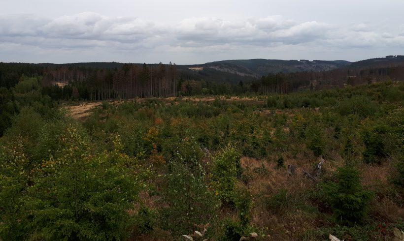 Ewiger Wald